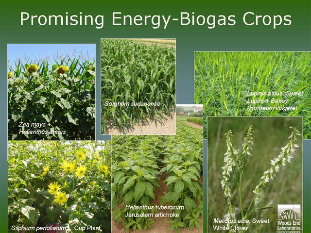 Bioenergy Crops for On-Farm Energy Production of Biogas — The Next ...
