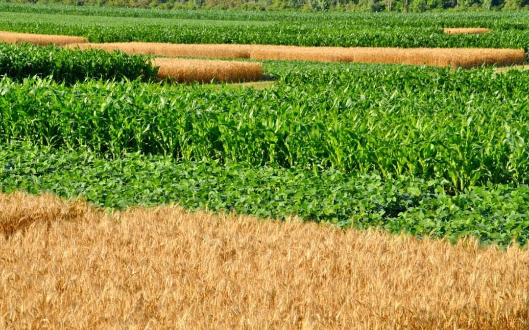 Solvita® Soil Tests confirmed through long-term field research as valuable testing tools for evaluating Soil Health